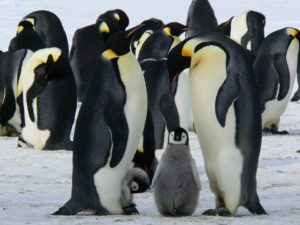Holiday-Experience- Travel-by-Lesley-Penguins