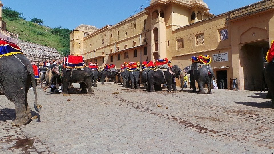 elephants-amer-fort